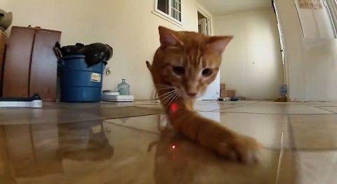 猫 ポインタ視点で追い掛け回される02