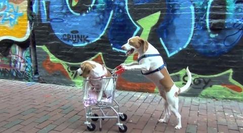 犬 ショッピングカートをさまざまな場所で02