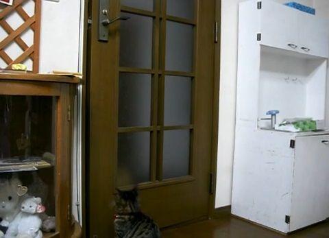 猫 扉を開けたのに閉じられる02