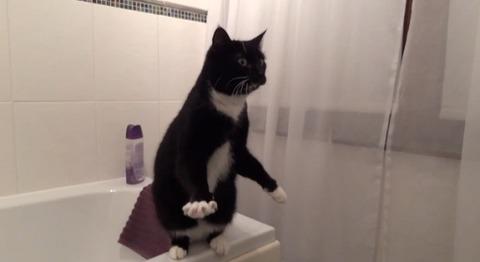 猫 洗面台の鏡に01
