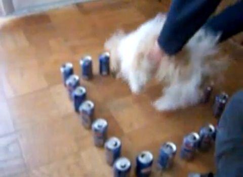 犬 ペプシの結界01