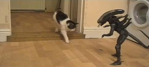 猫 vs Alien05