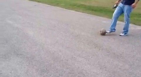 犬 ボールをパスして遊び続ける03