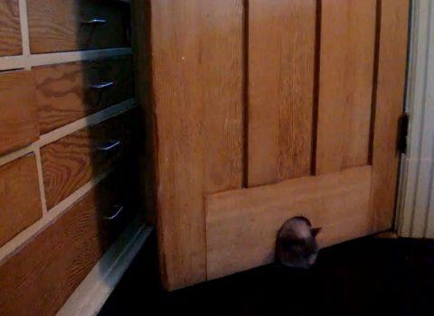 猫 ドアを開ける変わった方法03