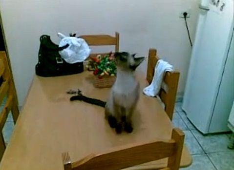 猫 天井の虫が気になる?05