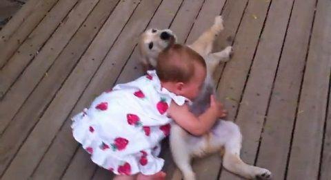 子犬 赤ちゃんにダッシュ>下から甘える04