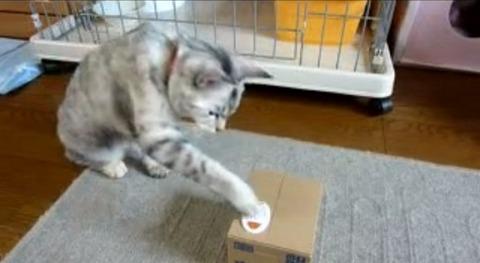 猫 いたずらBANKにねこパンチ02