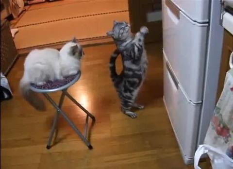 猫 冷蔵庫前で拝み続ける00