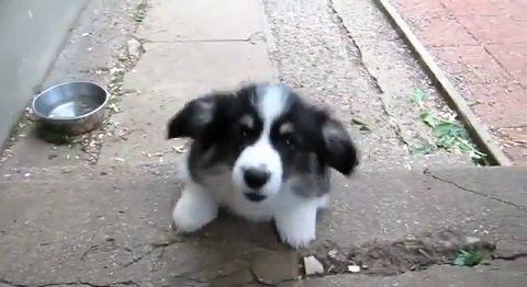 子犬 階段の昇り降り練習02