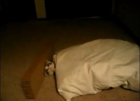 子猫 ベッドイン04