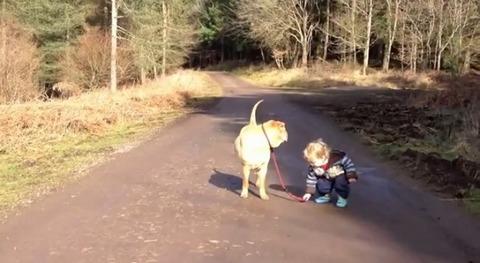 犬 子供と散歩で水溜り03