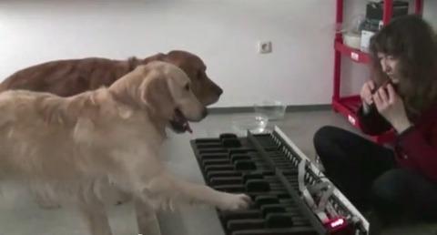 犬 piano 04