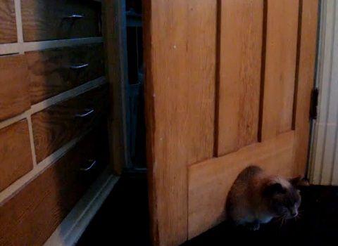 猫 ドアを開ける変わった方法02