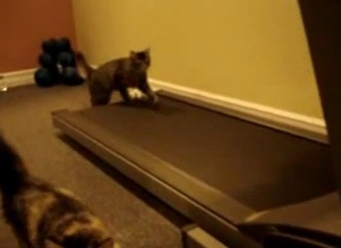 猫 ルームランナーで歩こうと06