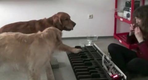 犬 piano 01