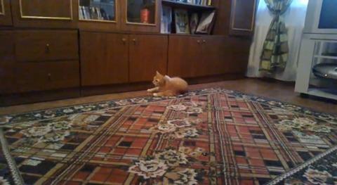 猫 ダンゴムシ06