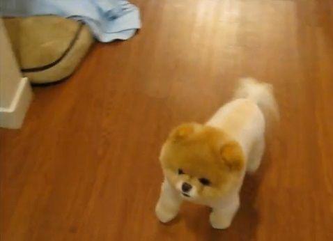 犬 キャリーバッグ好きなポメ02