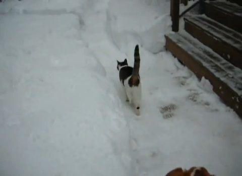 猫は喜び庭駆け回る00