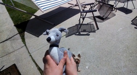 犬 googleglassで飼い主が撮影02