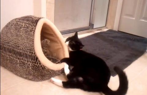 猫 新入り子猫に01