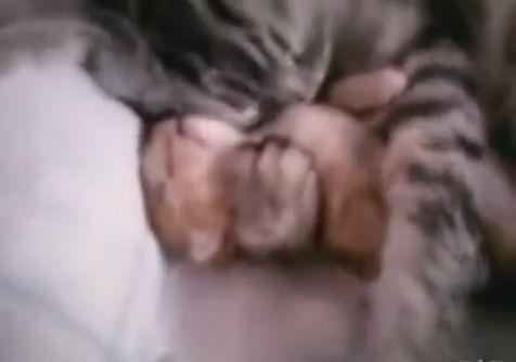 猫親子 寝相05