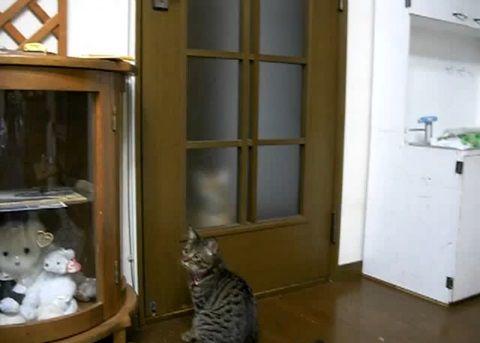 猫 扉を開けたのに閉じられる00