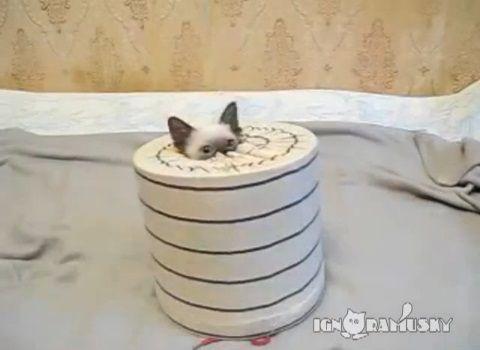 子猫 猫要塞の攻防05