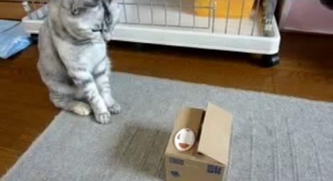 猫 いたずらBANKにねこパンチ00