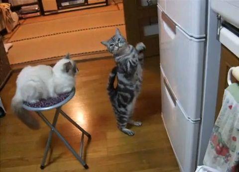 猫 冷蔵庫前で拝み続ける02