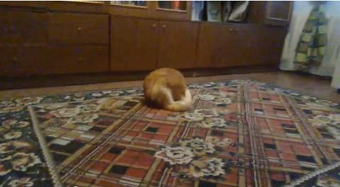 猫 ダンゴムシ03