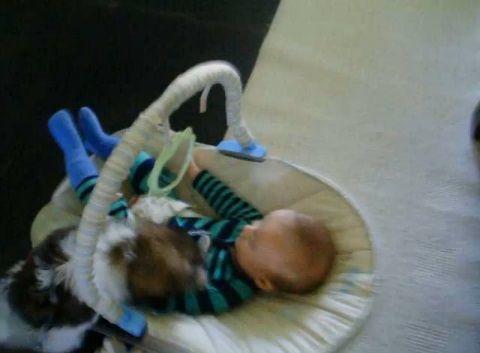 子犬 赤ちゃんベッドに登ってペロペロ00