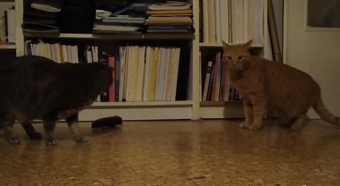 猫 メトロノーム08
