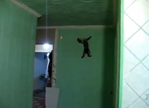 猫 レーザーポインタで壁登り07
