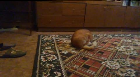 猫 ダンゴムシ01
