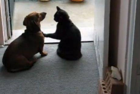 犬猫 ちょっとストップ05
