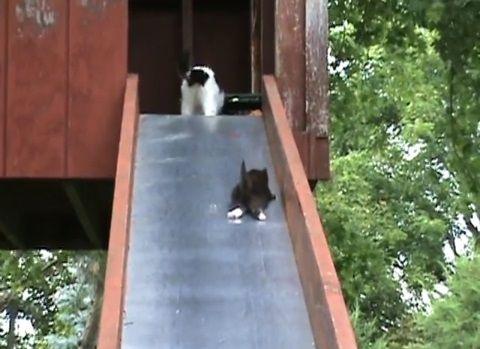 子猫 滑り台でhelp04