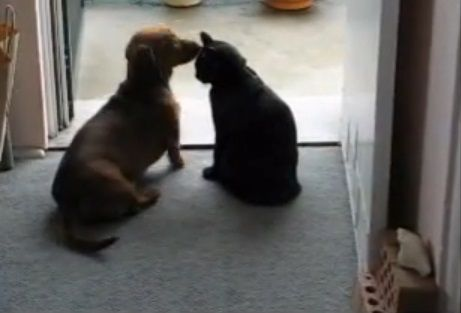 犬猫 ちょっとストップ01