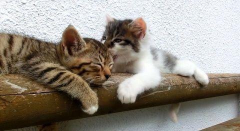 子猫 寝ている子猫に遊んで欲しい00