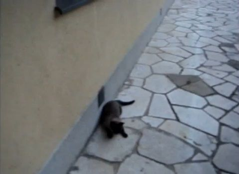 猫 rollで回転する00