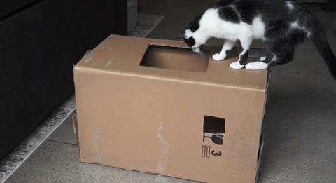 猫 箱を出たり入ったりな2匹04