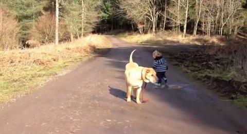 犬 子供と散歩で水溜り04