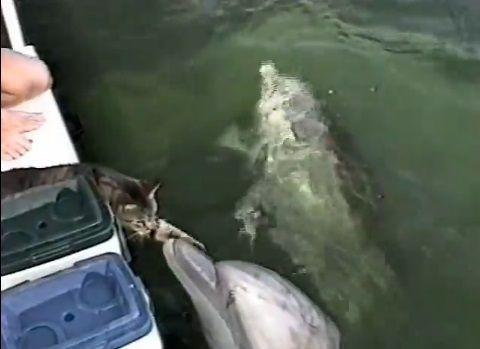 猫 イルカと仲良し02