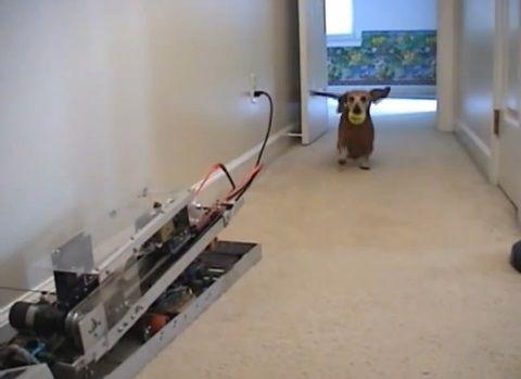 犬 ピッチングマシン?07