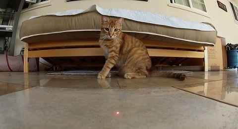 猫 ポインタ視点で追い掛け回される00