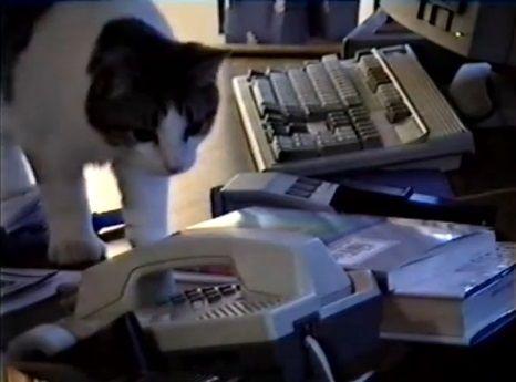 猫 電話に出ない01