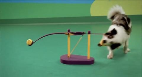 犬 ドッグフードのCM・ピタゴラ装置01
