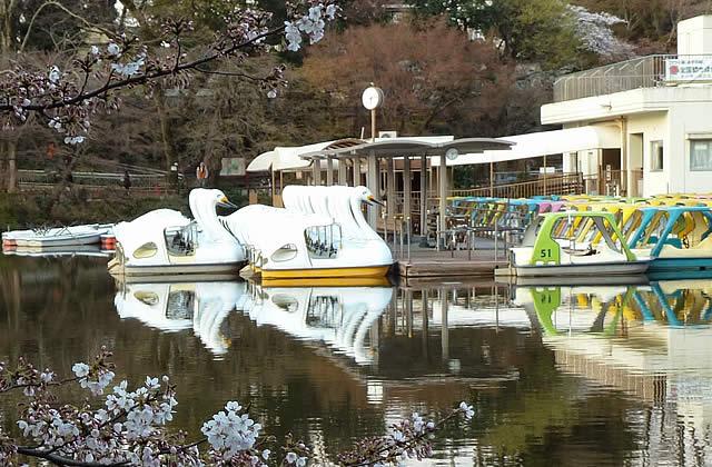 井の頭公園_スワンボート