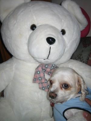 sammy and bear