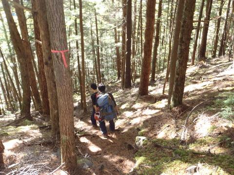 熊の穴沢下部樹林帯