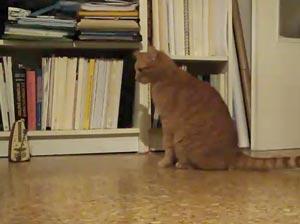 メトロノームと猫